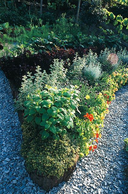 Det går också utmärkt att bygga upp ett grönsaksland med hjälp av torvblock.  Torvblocken går lätt att skära till passande form. Sedan är det bara att fylla på med jord och så. Här är det kryddor som samsas med blomsterkrasse.  Foto: Kerstin Engstrand