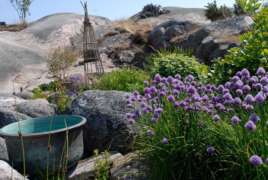Även bland stenhällar kan man odla. Till höger skymtar gräslök i blom.  Foto: Kerstin Engstrand