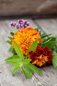 Foto: Blomsterfrämjandet/Minna Mercke Schmidt