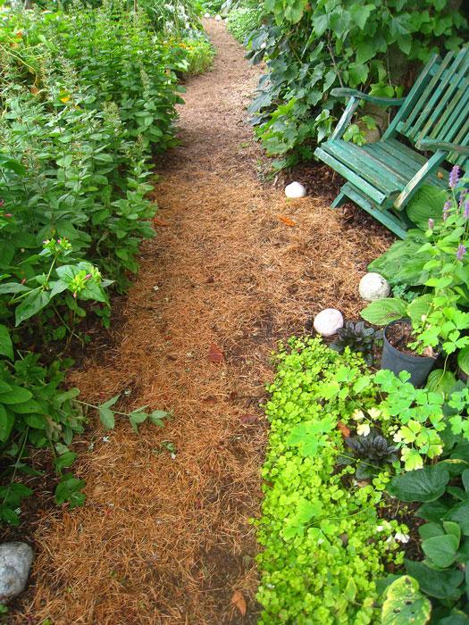 Tallbarr läggs i gångarna. Foto: Kerstin Engstrand