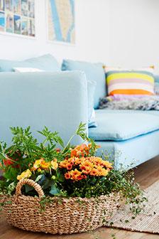 Samplantering med färgstarka begonior och krysantemum tillsammans med gröna prydnadsväxter.