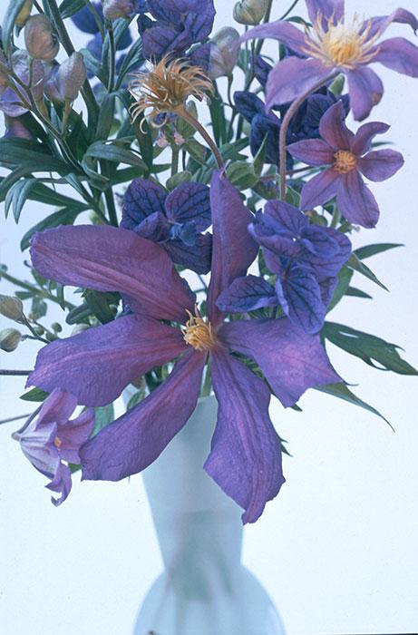 Klematisbukett av blommor från Magnus trädgård. Foto: Kerstin Engstrand