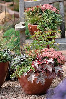 Härlig blandning av växter i rosa, röda och gröna toner. Foto:  Blomsterfrämjandet/Hörnhems