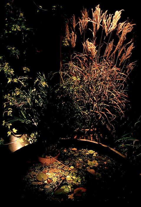 wjapgrass