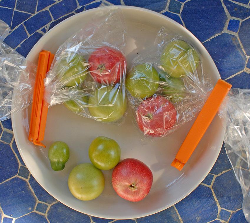 Dag 1: Tre olika sorters omogna  tomater. De nederst på bilden kommer att få ligga i ljus utrymme som håller 15 grader. De överst till vänster kommer att få mogna i utrymme som håller 20-22 grader och är mörkt. De i påsen överst till höger kommer att få mogna i mörkt utrymme som håller en temperatur av 10 grader. Foto: Kerstin Engstrand