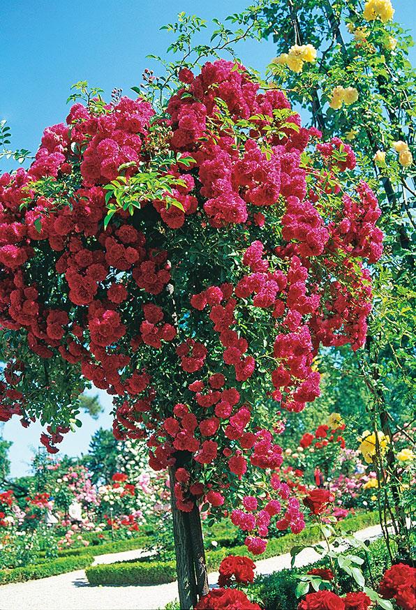 Ljuvlighetens trädgård I Paris. Foto: K. Engstrand