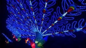 och de blir påfågelsblå när de är tända på kvällen.Foto: Chickwick House/Magical Lantern Festival