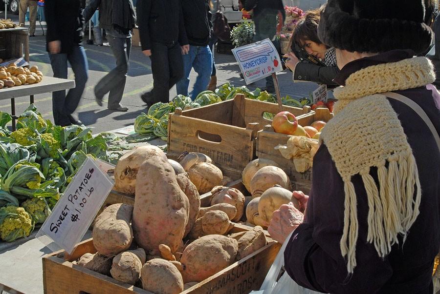 Sötpotatis är en populär gröda i USA. Och har man tur kan en enda sötpotatis bli hela 1,5 kilo tung! Foto: Kerstin Engstrand