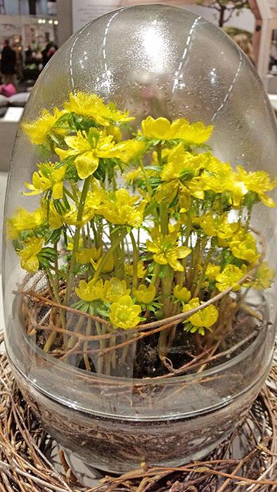 """Härligt blommande """"påskägg"""". Blomsterkreatören Gunnar Kaj fyllde Design House Stockholms """"Grow miniväxthus"""" i den senaste storleken """"M"""" ( höjd 23 cm) med just vintergäck. Grow är skapad av Caroline Wetterling och är gjord av två delar. Den nedre delen håller jorden och växten, den övre delen är ett lock med en pip, så att den kan användas som en vattenkanna. Den fungerar också som en ventil som håller luft och reglerar fukt  och temperaturen inuti växthuset. Grow är gjord av munblåst glas. Foto: Kerstin Engstrand"""