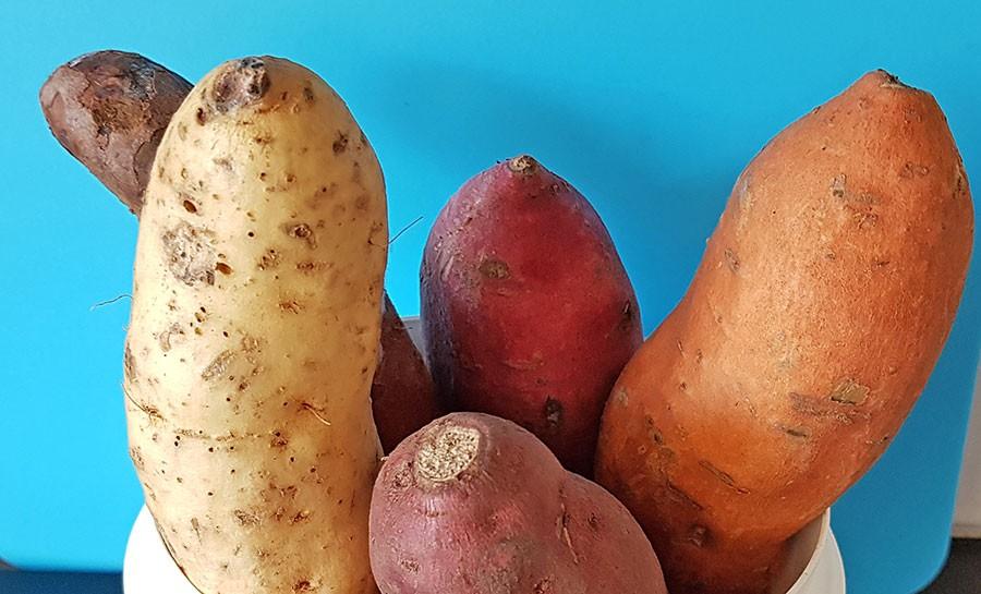 Vit, rosa, lila och orange sötpotatis. Foto: Kerstin Engstrand