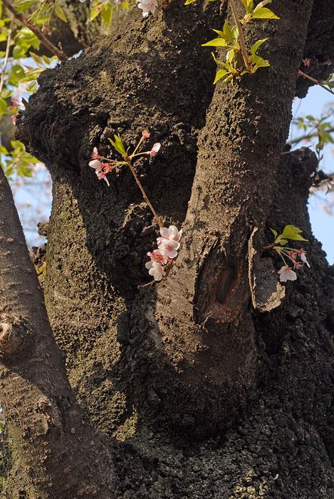 Gamla träd. Foto: Kerstin Engstrand