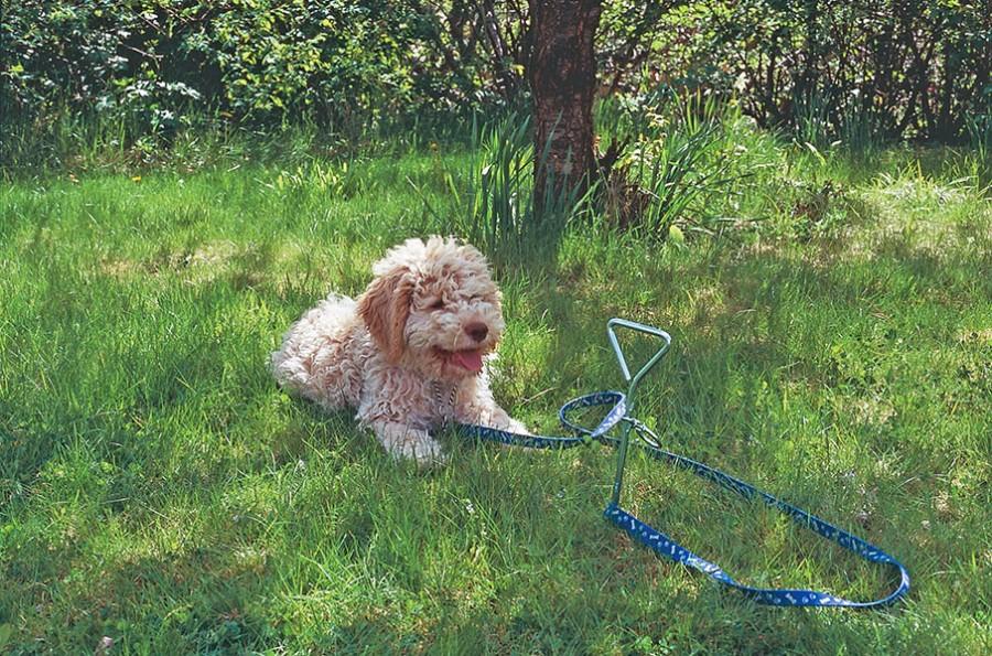 Det finns krokar som man borrar ner i gräsmattan som fungerar som bra extra hållare när man är på besök i andra trädgårdar eller parker. Foto: Kerstin Engstrand