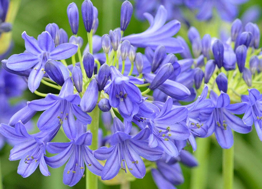 Flower of Love, ny. Foto: Kerstin Engstrand