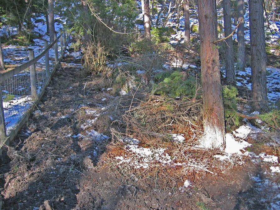 Ett lågt staket skyddar markerna. Staket som syns till vänster i bild skyddade grannens ägor. Foto: Kerstin Engstrand