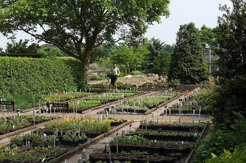 Hans Kramers plantskola. Foto: Hans Kramer