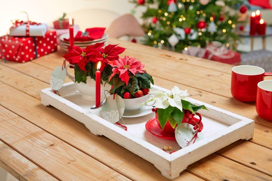 Stearinljus och julklappar skapar julstämning. Idén att använda gamla kinatekoppar som krukor passar både vintage- och upcyclingfans och är också en utmärkt present. Foto: Blomsterfrämjandet/Stars for Europe