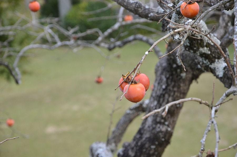 Visst liknar det ett äppelträd! Foto: Kerstin Engstrand