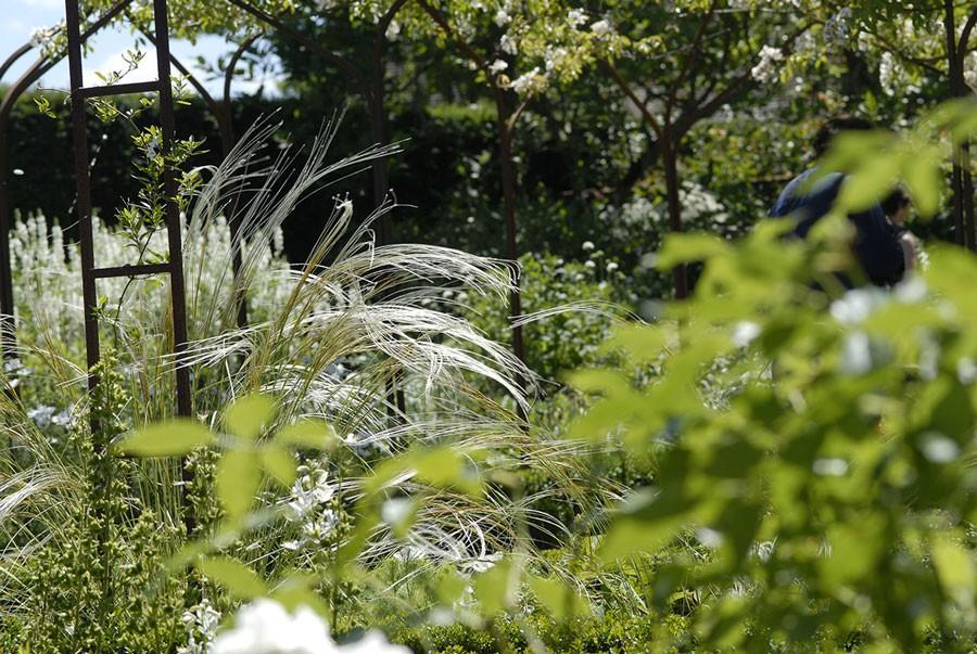 Skäggfjädergräset börjar för vinden.  Foto: Kerstin Engstrand