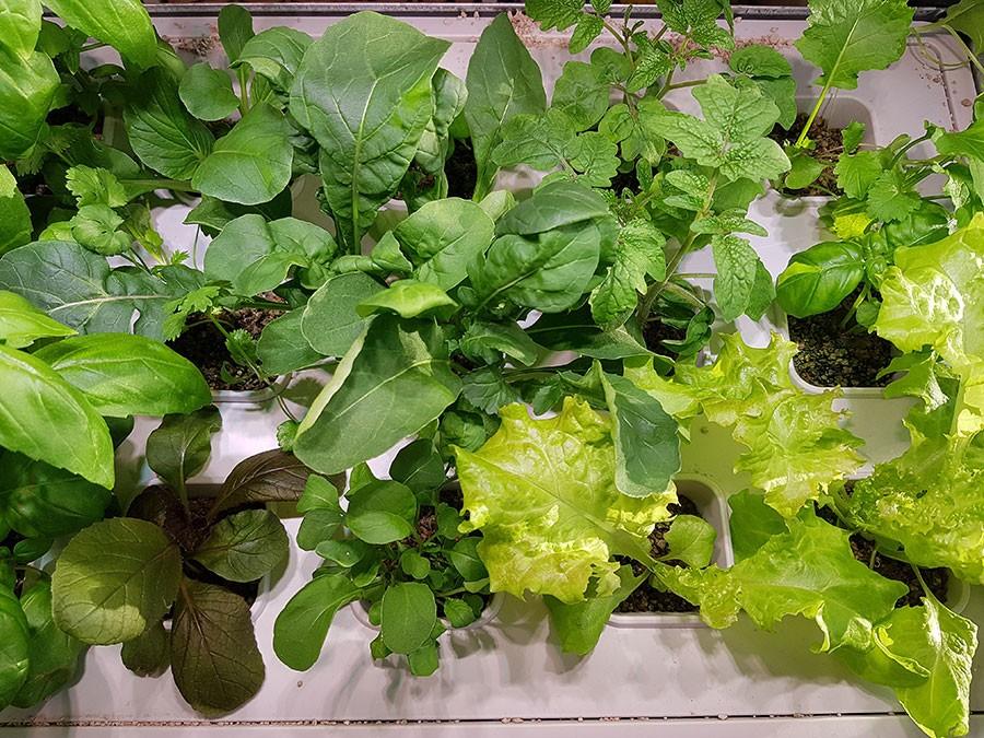15 olika växter går att odla på en så liten yta som 55 x 35 cm! Foto: Kerstin Engstrand