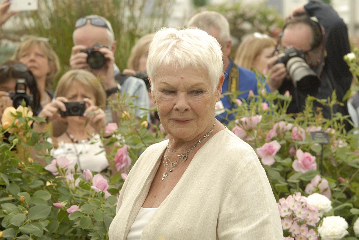 Alla vill fotografera henne, Judi Dench är oerhört populär. Hennes passion är träd, och ekorrar! Foto: Kerstin Engstrand