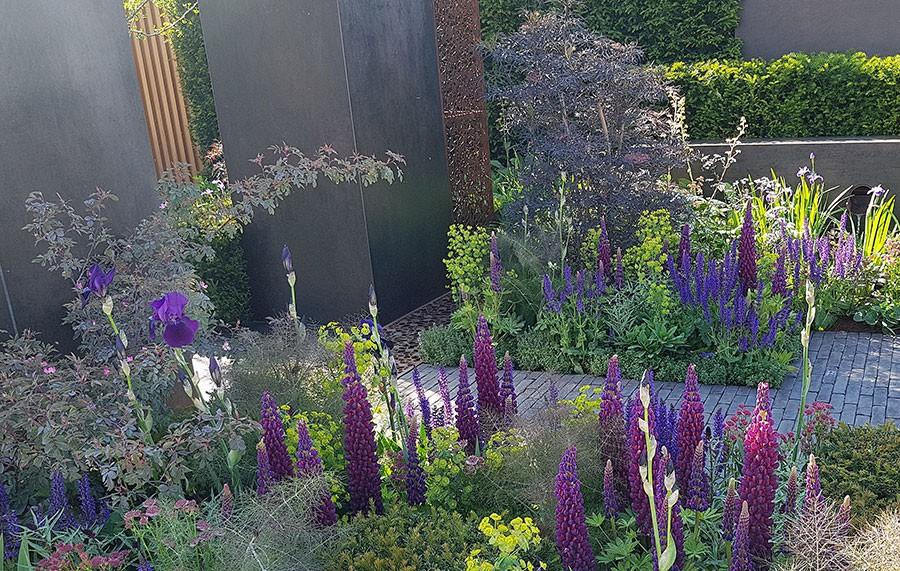 Mörkt rödlila lupiner och iris i Tony Woods trädgård Urban Flow. Foto: Kerstin Engstrand