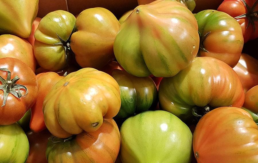 I Italien använder an halvmogna tomater i sallad.   Foto: Kerstin Engstrand