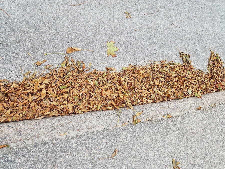 Drivor av vissna löv i slutet av juli, det ser ut som höst! Foto: Kerstin Engstrand