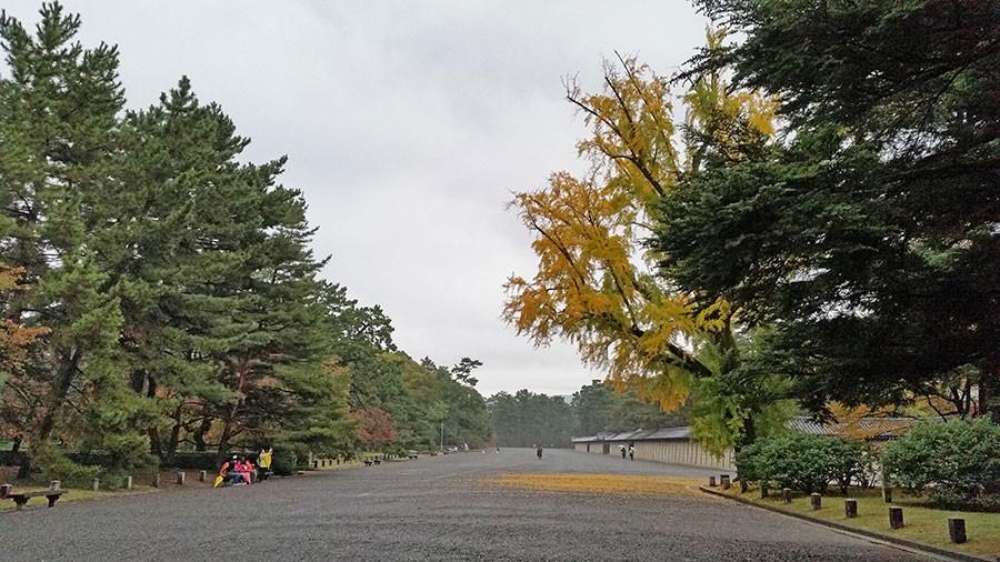 Ginkgon färgar också marken med guld. Foto: Kerstin Engstrand