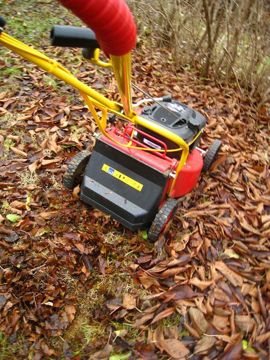 Gräsklipparen är ett bra hjälpmedel. Foto: Kerstin Engstrand