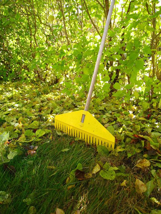 Häckar, buskar och träd mår bra av lite löv. Foto: Kerstin Engstrand