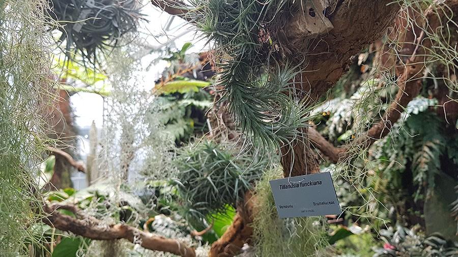Foto: Kerstin Engstrand, bilden är tagen i Bergianska trädgårdens stora växthus.