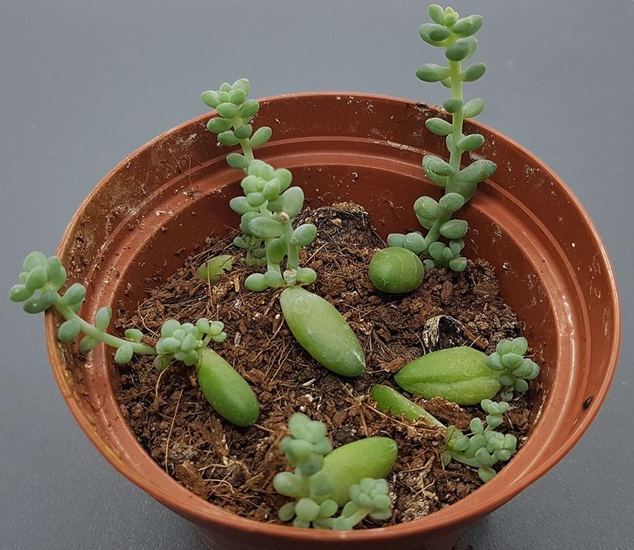Det tar lite tid men de växer. Efter ett halvår har bladen vuxit till sig. Foto: Kerstin Engstrand