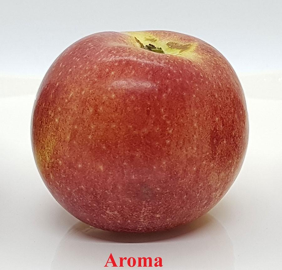 Aroma. Foto: Kerstin Engstrand