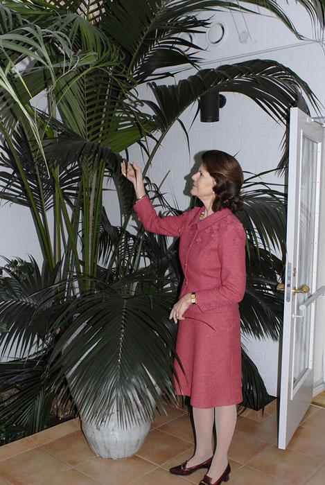 I Silviahemmets ljusgård fanns denna enorma palm. Det finns mycket symbolik i dess storlek, som anhörig och medmänniska känner man sig ofta liten när ens kära har fått demens. Foto: Kerstin Engstrand