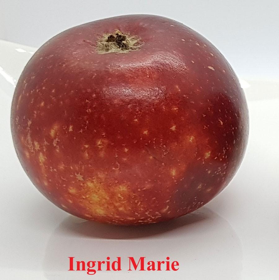Ingrid Marie. Foto: Kerstin Engstrand
