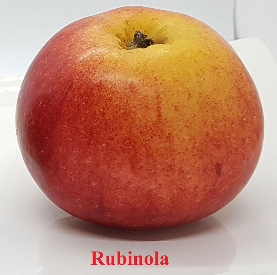 Rubinola, ett äpple på frammarsch. Foto: Kerstin Engstrand