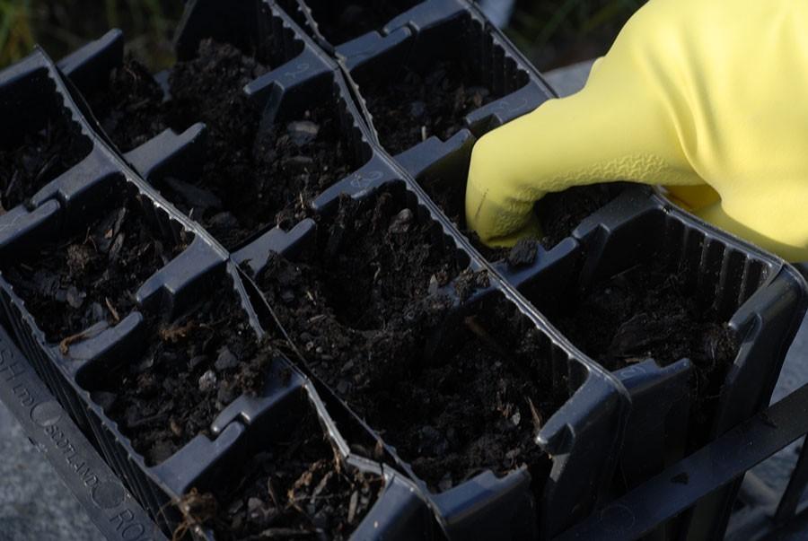 Så kallade roottrainers är särskilt bra  att så luktärter, vanliga ärter  eller bönor i.  Varje fack kan lätt öppnas vilket gör att  plantornas rötter inte skadas. Foto: Kerstin Engstrand