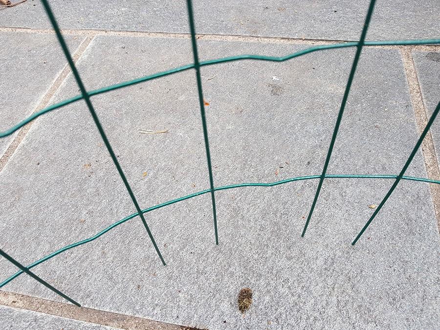 """Nu har """"buren"""" piggar så det är lätt att sätta ner den i krukan. Foto: Kerstin Engstrand"""