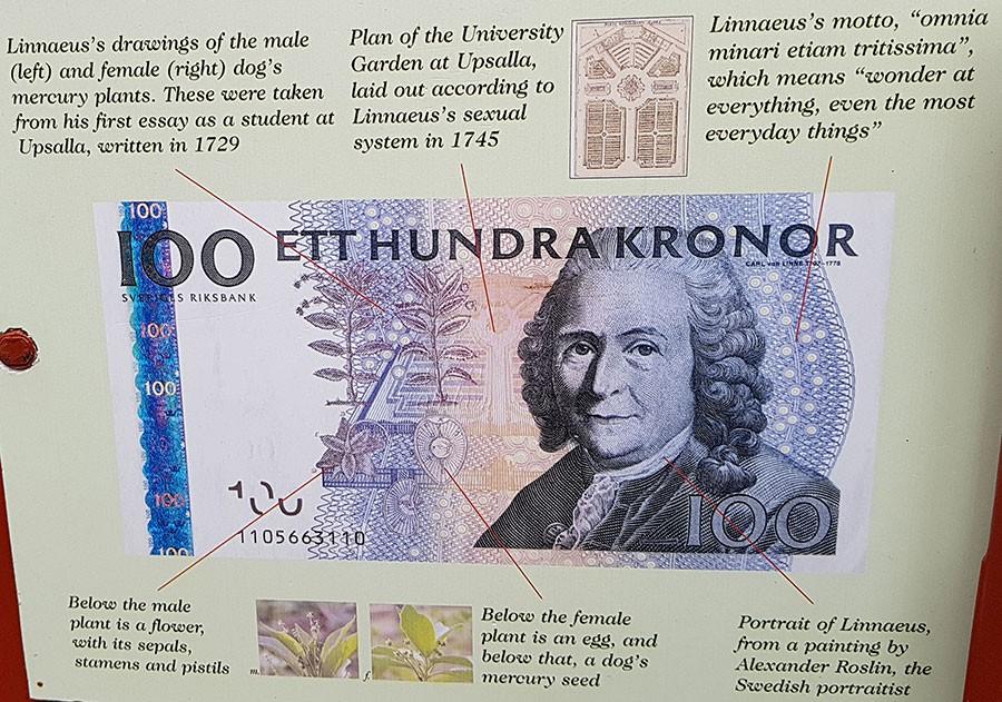 Att Linné uppmärksammas i Chelsea Physic Garden i London är en självklarhet.