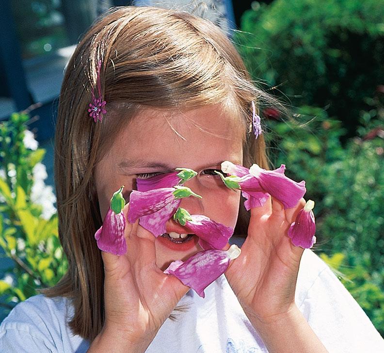 Digitalis, fingerborgsblomma,  är giftig om man förtär den. Giftinformationscentralen anger: Speciellt bladen innehåller bl.a. digitalis, som kan påverka hjärtat. Allvarliga förgiftningar har inträffat vid medicinsk användning och vid förväxling. Förgiftningar genom olyckshändelse hos barn är dock ovanliga.