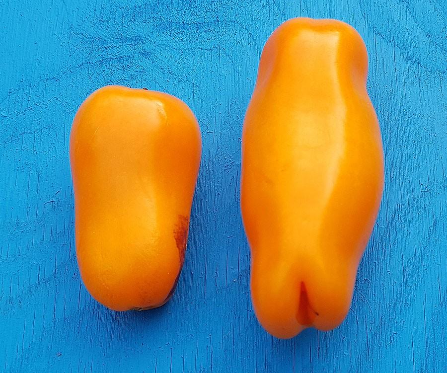 Vad är detta? Jo, till vänster en spetspaprika och till höger en hållbar tomat. Banantchik. Foto: Kerstin Engstrand