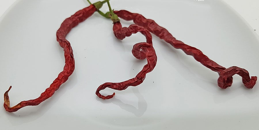 Torkade chilifrukter av sorten 'Spaghetti'.  Foto: Kerstin Engstrand