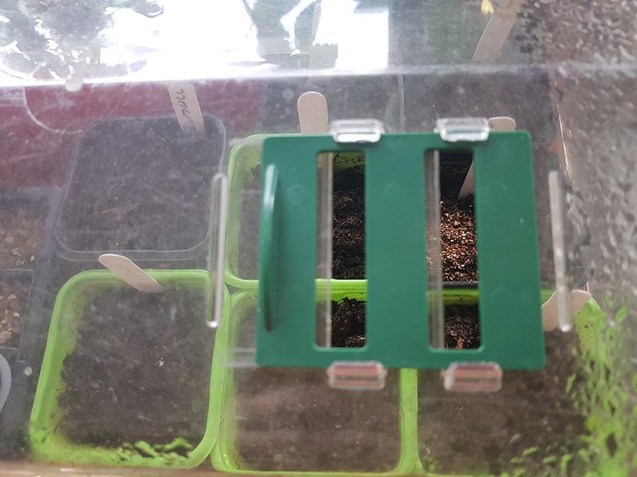 stabilt minivöxthus som jag haft i så många år att jag inte lngre kommer ihåg när det köptes. det har två öppningar i taket som underlättar när man ska reglera luftfuktigheten. Foto: Kerstin Engstrand