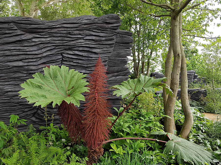 Ovanlig växt i en ovanlig trädgård. Foto: Kerstin Engstrand