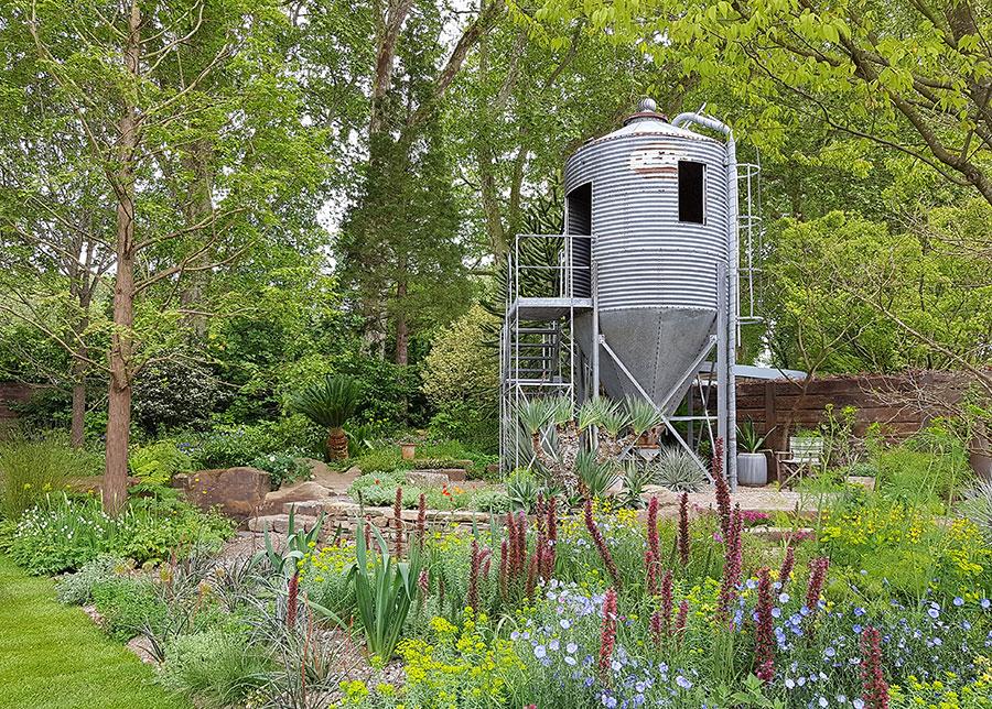 the resilience garden  rabarber