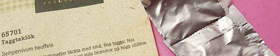 Frön av taggtaklök. Foto: Kerstin Engstrand