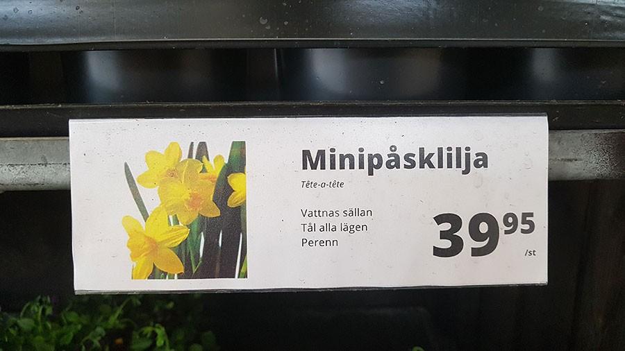 vv35606