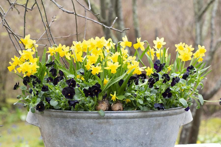 Foto: Annika Christensen för Blomsterfrämjandet